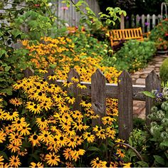 Easy-Growing Flowers for Fences | Black-eyed Susan.    I definitely want some of these !!!