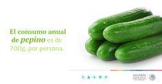 El consumo anual de pepino es de 700g. por persona. SAGARPA SAGARPAMX