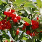 10 ανθεκτικά φυτά για μπαλκόνι | Τα Μυστικά του Κήπου Stuffed Peppers, Fruit, Vegetables, Garden, Decor, Garten, Decoration, Stuffed Pepper, Lawn And Garden