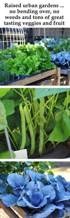 The Best Way To Garden - Raised Urban Gardens… No bending over, no weeds and tons of great tasting veggies and fruit   For more details about this please visit raisedurbangardens