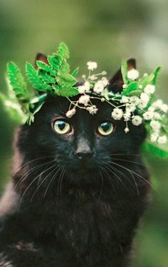 If you are going to San Francisco.....be sure to wear some flowers in your hair... Tap the link Now -  Luxury Cat Gear - Treat Yourself and Your CAT!  Stand Out in a Crowded World!