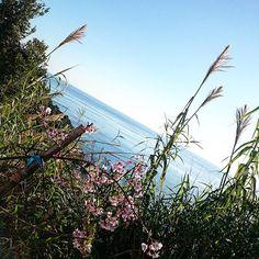 【wkana.0227】さんのInstagramをピンしています。 《#カコソラ#昨日#空#海#ブルー  #道端#桜の木#すすき  おはようございます💙今日ゎ👹✨節分  誰が鬼かなあ~💛✨わくわく  昨日の道端で見つけた🌸桜の木  もぉ咲いてて興奮した🌸春の訪れ  夜中?早朝?ふともも痛くて目覚めて  マッサージ💦腰からのダメージもあるかな  温めながらマッサージ…恐怖心から足に  力が入るけん余計だろうね✨お風呂で  マッサージしていたけど日頃ストレッチするよう  心掛けよう(*˙╰╯˙*)今日ゎゆったりと💙》