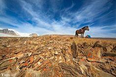 Конь между небом и землей. Фото: Ю. Овчинников  Пишите нам в WatsApp: +7 913 698 4444 На электр.почту: mongtur@mail.ru Звоните по тел: +7 913 698 4444  Будем рады ответить на все Ваши вопросы!  #mongoliantour #mongolia #altay  monaltay.ru