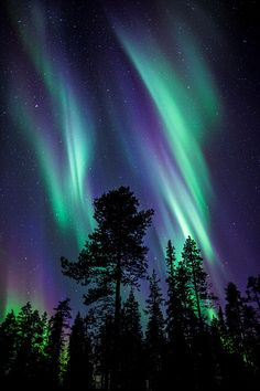Colours of the Aurora Borealis - Lapland