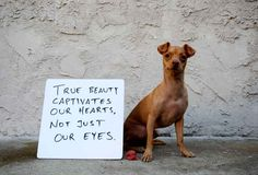 Tuna's latest project, appropriately called { eMpOwermEnt }, is a simple application of a powerful message and a whiteboard. | Why Tuna Is The Most Inspiring Dog On The Internet