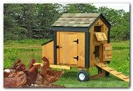 Chicken coop for four chickens