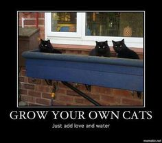 How to grow your own black cat...