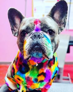 Let's Enjoy this adorable design done by Alyssa Farber with OPAWZ Permanent Pet Hair Dyes. Suitable for Dogs & Horses with long and short hair 😉. For professional use. Long-Lasting Style, more than 20 washes. Dog Hair Dye, Dyed Hair, Creative Grooming, Dog Haircuts, Permanent Hair Dye, Pet Grooming, Animal Photography, French Bulldog, Your Dog