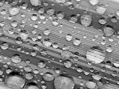 Photo of water on bamboo leaf by Kieran Hyde