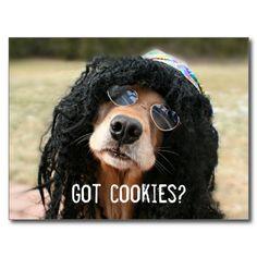 "Golden Retriever Hippie ""Got Cookies?"" Postcards"
