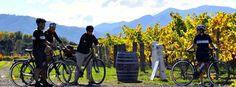 Wein tasting in Neuseeland