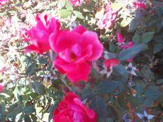 PT 184 OCT 13 FLOWERS IN NAMPA IDAHO.