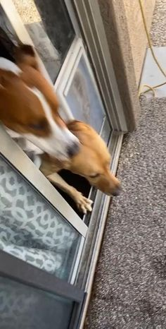 Cute Funny Dogs, Cute Funny Animals, Cute Baby Animals, Cute Cats, Funny Animal Jokes, Funny Animal Pictures, Cute Animal Videos, Cool Pets, Animals Beautiful