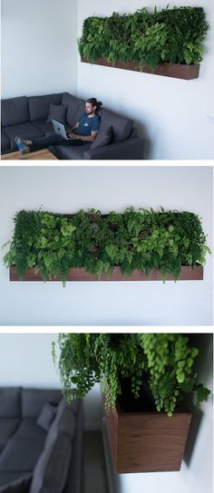 These ingenious, self-watering vertical gardens bring lush greenery into a small space with minimal maintenance.