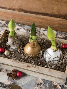 Easy Care Waxed Amaryllis Crate, Set of 3