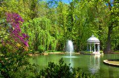 Cómo hacer un jardín acuático - http://www.jardineriaon.com/como-hacer-un-jardin-acuatico.html #plantas
