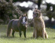 Small Horse - Pixdaus
