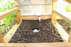Suburban Aquaponics - Replacing River Rock and Transplanting Crops ~ Simple Suburban Living