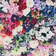 Pinterest || Carolina Torres