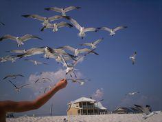 feeding the sea gulls