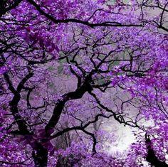Wall mural purple spring - landscape - water • PIXERSIZE.com