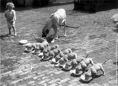 vintage everyday: Interesting Vintage Photos of Baby Animals