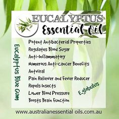 Potential healing benefits of Eucalyptus Australian Blue Gum. Australia's largest exported #Essential oil #eucalyptus oil #australianessentialoils #australianessentialoilsandbotanicalgifts #naturopath #aromatherapy #aroma #scent #alternativetherapy #naturaltherapies  #brisbaneanyday #healthandwellness #redlandsanyday #homeopath #brisbane #brisbanebusiness #holistichealth #holistic #naturaltherapies