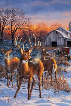 Deer...Rosemary Millette