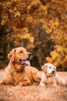 Golden generations @Susan This will be Sadie and a new puppy!! SO CUTE!!