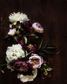 """""""Floral Portrait"""" - @katiekukulka"""
