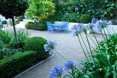 Contemporary family garden islington - box, hebes, agapanthus, small contained garden within garden