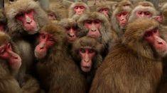 Best animal photos of the week - Animal Tracks Monkey Pictures, Cute Animal Pictures, Animal Pics, Funny Animal Videos, Funny Animals, Cute Animals, Wild Animals, Japanese Macaque, Animal Tracks