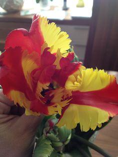 tulipán papagayo. Rose, Plants, Jewelry, Flowers, Jewellery Making, Roses, Jewerly, Jewlery, Jewelery