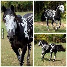 A Horse's Halloween Costume