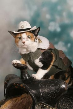 Such a beautiful little kitty! She looks so dignified, as if she were a noblewoman posing elegantly for a portrait! Baby Animals, Cute Animals, Cats Cast, Pet Costumes, Halloween Costumes, Funny Animal Pictures, Beautiful Cats, Pretty Cats, Funny Cats