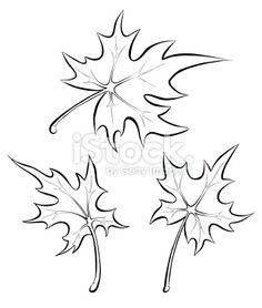 Free Flower Line Drawings | ... leaves. Freehand drawing. Royalty Free Stock Vector Art Illustration