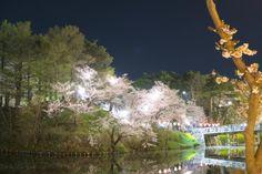 92:「高田の桜」@高田公園