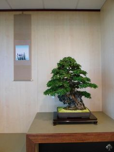Shows and exhibitions - 2012 - Bonsai Empire