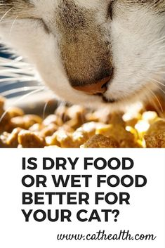 What is best for a #cat's diet, wet food or dry food? Learn the pros and cons of both wet and dry food to determine which would be best for your cat in this article written by a veterinarian.
