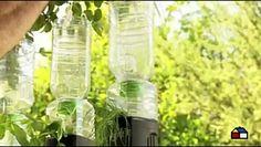 Aprende a construir un huerto vertical con botellas de plástico: https://m.facebook.com/story.php?story_fbid=10159267668965068&id=179495650067  #enterate #Tecnologia #FelizJueves #LluviasCDMX