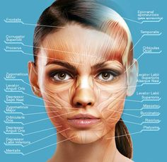 Image result for where to place botox
