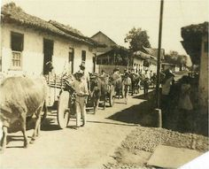 Entrada de carretas con leña a Alajuela. Por Rodrigo Fernández.