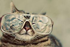 Cat glasses: Awww! Made me smile