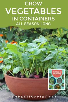 You can grow a lot of vegetables in containers from spring to fall. Use this plant list and tips to get started. Container Gardening, Gardening Tips, Succession Planting, Growing Veggies, How To Grow Taller, Potting Soil, Back Gardens, Compost