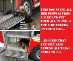 Social Awareness, Fire Trucks, Puppies, Dogs, Cubs, Pet Dogs, Fire Engine, Doggies, Pup