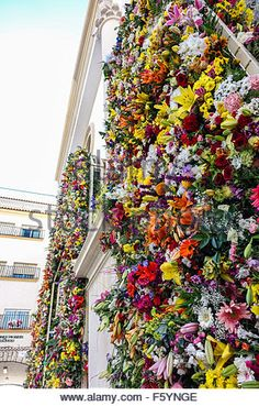 Benidorm, Spain. 9th November, 2015. Floral display at the church in Benidorm old town as part of the Fiestas Major.