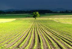 Veld in de Limousin  #Limousin #France #field