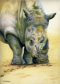 Bev Lewis Colored Pencil sketch of rhinoceros rhino colors February 2015 Colored Pencil Artwork, Coloured Pencils, Color Pencil Art, Animal Paintings, Animal Drawings, Watercolor Animals, Watercolor Art, Jackson Pollock, Original Art For Sale