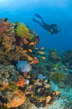 Visayas, meca del buceo en Filipinas     Cebu, Bohol, Leyte, de Negros, Siquijor son las islas que conforman parte de la zona conocida como Visayas, la meca del buceo filipino, pero la lista es infinita, pues el archipiélgo asiático tira de submarinismo para atraer al turismo con mayúsculas, todo un regalo de la naturaleza. Hoteles de cinco estrellas salpican las pequeñas islas, desde donde se accede a barreras coralinas repletas de fauna marina.    www.buceas.es