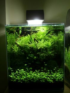 Potential aquarium decorations Take the Challenge
